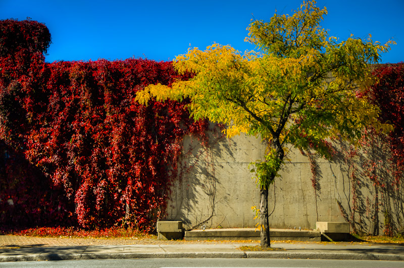 Le square Viger en automne. Montreal in picture, 2012.
